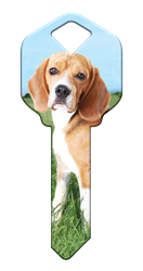 HK63 - Beagle house, happy, key, keys, beagle, dog, dogs, puppy, kw1, kw10, sc1, wr5