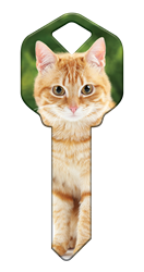 HK66 - Orange Tabby house, happy, key, keys, orange, tabby, cat, cats, kitten, kw1, kw10, sc1, wr5