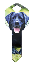 HK59 - Labrador Retriever house, happy, key, keys, labrador, retriever, dog, dogs, puppy, kw1, kw10, sc1, wr5